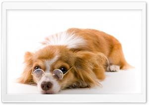 Dog Ultra HD Wallpaper for 4K UHD Widescreen desktop, tablet & smartphone