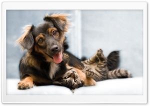Dog And Cat Friendship HD Wide Wallpaper for 4K UHD Widescreen desktop & smartphone
