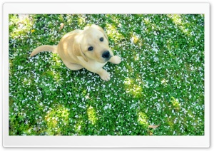 Dog And Spring HD Wide Wallpaper for 4K UHD Widescreen desktop & smartphone