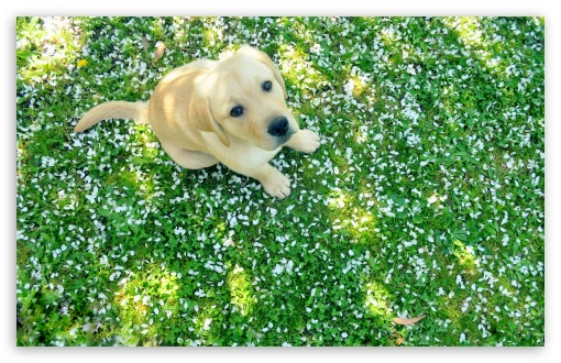 Dog And Spring HD wallpaper for Wide 16:10 5:3 Widescreen WHXGA WQXGA WUXGA WXGA WGA ; HD 16:9 High Definition WQHD QWXGA 1080p 900p 720p QHD nHD ; Standard 4:3 5:4 3:2 Fullscreen UXGA XGA SVGA QSXGA SXGA DVGA HVGA HQVGA devices ( Apple PowerBook G4 iPhone 4 3G 3GS iPod Touch ) ; Tablet 1:1 ; iPad 1/2/Mini ; Mobile 4:3 5:3 3:2 16:9 5:4 - UXGA XGA SVGA WGA DVGA HVGA HQVGA devices ( Apple PowerBook G4 iPhone 4 3G 3GS iPod Touch ) WQHD QWXGA 1080p 900p 720p QHD nHD QSXGA SXGA ; Dual 16:10 4:3 5:4 WHXGA WQXGA WUXGA WXGA UXGA XGA SVGA QSXGA SXGA ;