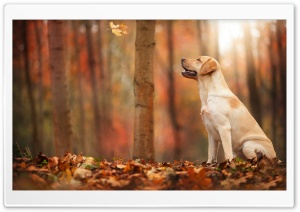 Dog Autumn HD Wide Wallpaper for Widescreen