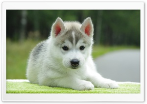 Dog Cute Ultra HD Wallpaper for 4K UHD Widescreen desktop, tablet & smartphone