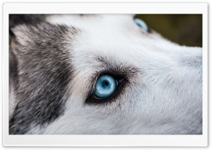 Dog Eye Ultra HD Wallpaper for 4K UHD Widescreen desktop, tablet & smartphone