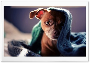 Dog Hidden under Scarf HD Wide Wallpaper for Widescreen