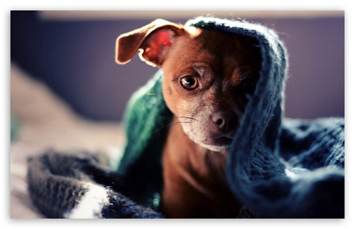 Dog Hidden under Scarf ❤ 4K UHD Wallpaper for Wide 16:10 5:3 Widescreen WHXGA WQXGA WUXGA WXGA WGA ; 4K UHD 16:9 Ultra High Definition 2160p 1440p 1080p 900p 720p ; Standard 4:3 5:4 3:2 Fullscreen UXGA XGA SVGA QSXGA SXGA DVGA HVGA HQVGA ( Apple PowerBook G4 iPhone 4 3G 3GS iPod Touch ) ; Tablet 1:1 ; iPad 1/2/Mini ; Mobile 4:3 5:3 3:2 16:9 5:4 - UXGA XGA SVGA WGA DVGA HVGA HQVGA ( Apple PowerBook G4 iPhone 4 3G 3GS iPod Touch ) 2160p 1440p 1080p 900p 720p QSXGA SXGA ;