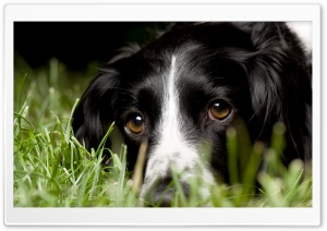Dog In Grass HD Wide Wallpaper for 4K UHD Widescreen desktop & smartphone
