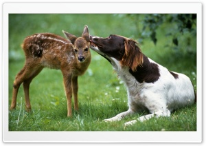 Dog Licking Fawn HD Wide Wallpaper for 4K UHD Widescreen desktop & smartphone