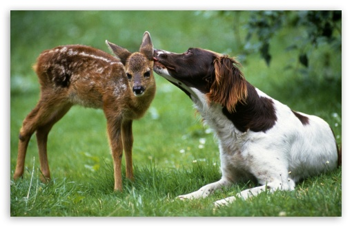Dog Licking Fawn ❤ 4K UHD Wallpaper for Wide 16:10 5:3 Widescreen WHXGA WQXGA WUXGA WXGA WGA ; 4K UHD 16:9 Ultra High Definition 2160p 1440p 1080p 900p 720p ; Standard 3:2 Fullscreen DVGA HVGA HQVGA ( Apple PowerBook G4 iPhone 4 3G 3GS iPod Touch ) ; Mobile 5:3 3:2 16:9 - WGA DVGA HVGA HQVGA ( Apple PowerBook G4 iPhone 4 3G 3GS iPod Touch ) 2160p 1440p 1080p 900p 720p ;