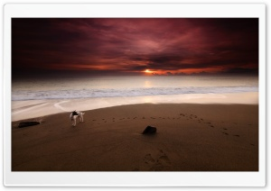 Dog On The Beach HD Wide Wallpaper for Widescreen