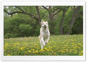 Dog Running HD Wide Wallpaper for Widescreen