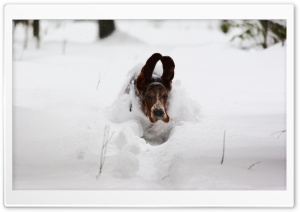 Dog Running In Snow HD Wide Wallpaper for Widescreen