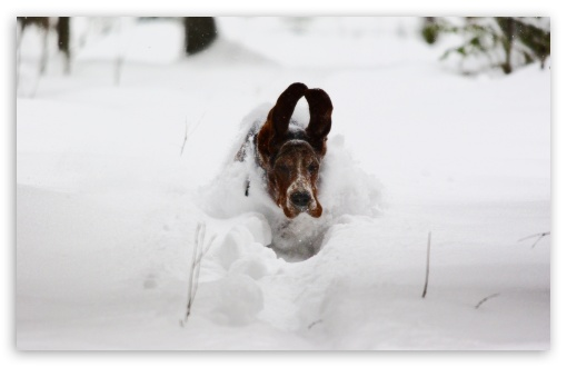 Dog Running In Snow HD wallpaper for Wide 16:10 5:3 Widescreen WHXGA WQXGA WUXGA WXGA WGA ; HD 16:9 High Definition WQHD QWXGA 1080p 900p 720p QHD nHD ; Standard 4:3 5:4 3:2 Fullscreen UXGA XGA SVGA QSXGA SXGA DVGA HVGA HQVGA devices ( Apple PowerBook G4 iPhone 4 3G 3GS iPod Touch ) ; Tablet 1:1 ; iPad 1/2/Mini ; Mobile 4:3 5:3 3:2 16:9 5:4 - UXGA XGA SVGA WGA DVGA HVGA HQVGA devices ( Apple PowerBook G4 iPhone 4 3G 3GS iPod Touch ) WQHD QWXGA 1080p 900p 720p QHD nHD QSXGA SXGA ;