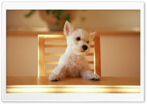 Dog Sitting On A Chair At The Table HD Wide Wallpaper for 4K UHD Widescreen desktop & smartphone