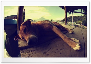 Dog Sleeping On A Pontoon HD Wide Wallpaper for 4K UHD Widescreen desktop & smartphone