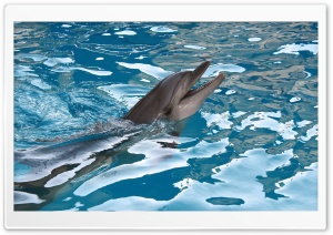 Dolphin HD Wide Wallpaper for Widescreen