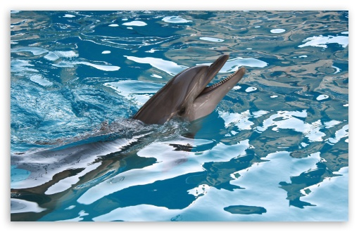 Dolphin HD wallpaper for Wide 16:10 5:3 Widescreen WHXGA WQXGA WUXGA WXGA WGA ; HD 16:9 High Definition WQHD QWXGA 1080p 900p 720p QHD nHD ; UHD 16:9 WQHD QWXGA 1080p 900p 720p QHD nHD ; Standard 4:3 5:4 3:2 Fullscreen UXGA XGA SVGA QSXGA SXGA DVGA HVGA HQVGA devices ( Apple PowerBook G4 iPhone 4 3G 3GS iPod Touch ) ; Tablet 1:1 ; iPad 1/2/Mini ; Mobile 4:3 5:3 3:2 16:9 5:4 - UXGA XGA SVGA WGA DVGA HVGA HQVGA devices ( Apple PowerBook G4 iPhone 4 3G 3GS iPod Touch ) WQHD QWXGA 1080p 900p 720p QHD nHD QSXGA SXGA ; Dual 4:3 5:4 UXGA XGA SVGA QSXGA SXGA ;