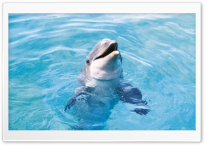 Dolphin HD Ultra HD Wallpaper for 4K UHD Widescreen desktop, tablet & smartphone