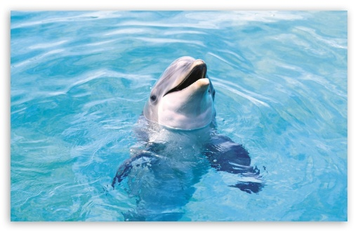 Dolphin HD ❤ 4K UHD Wallpaper for Wide 16:10 5:3 Widescreen WHXGA WQXGA WUXGA WXGA WGA ; 4K UHD 16:9 Ultra High Definition 2160p 1440p 1080p 900p 720p ; Standard 4:3 5:4 3:2 Fullscreen UXGA XGA SVGA QSXGA SXGA DVGA HVGA HQVGA ( Apple PowerBook G4 iPhone 4 3G 3GS iPod Touch ) ; Tablet 1:1 ; iPad 1/2/Mini ; Mobile 4:3 5:3 3:2 16:9 5:4 - UXGA XGA SVGA WGA DVGA HVGA HQVGA ( Apple PowerBook G4 iPhone 4 3G 3GS iPod Touch ) 2160p 1440p 1080p 900p 720p QSXGA SXGA ;