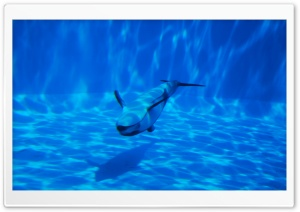 Dolphin Swimming Underwater HD Wide Wallpaper for Widescreen