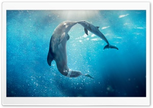 Dolphin Tale 2 Movie 2014 Ultra HD Wallpaper for 4K UHD Widescreen desktop, tablet & smartphone