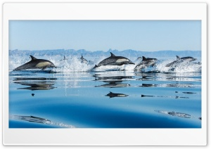 Dolphins In Sea HD Wide Wallpaper for 4K UHD Widescreen desktop & smartphone