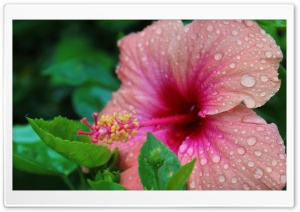 Doorplates on Hibiscus HD Wide Wallpaper for Widescreen