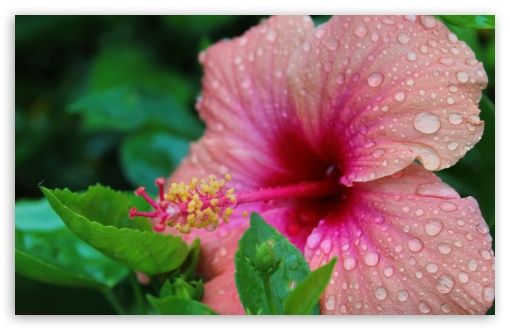 Doorplates on Hibiscus HD wallpaper for Wide 16:10 5:3 Widescreen WHXGA WQXGA WUXGA WXGA WGA ; HD 16:9 High Definition WQHD QWXGA 1080p 900p 720p QHD nHD ; UHD 16:9 WQHD QWXGA 1080p 900p 720p QHD nHD ; Standard 4:3 5:4 3:2 Fullscreen UXGA XGA SVGA QSXGA SXGA DVGA HVGA HQVGA devices ( Apple PowerBook G4 iPhone 4 3G 3GS iPod Touch ) ; Tablet 1:1 ; iPad 1/2/Mini ; Mobile 4:3 5:3 3:2 16:9 5:4 - UXGA XGA SVGA WGA DVGA HVGA HQVGA devices ( Apple PowerBook G4 iPhone 4 3G 3GS iPod Touch ) WQHD QWXGA 1080p 900p 720p QHD nHD QSXGA SXGA ;