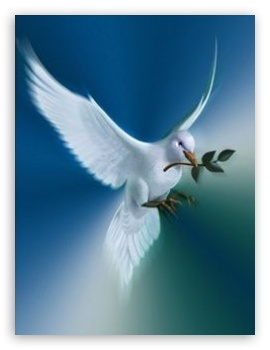 Dove of peace uhd desktop wallpaper for - Peace hd wallpapers free download ...