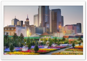 Downtown Dallas From The Flower Market HD Wide Wallpaper for 4K UHD Widescreen desktop & smartphone