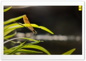 Dragon Fly Ultra HD Wallpaper for 4K UHD Widescreen desktop, tablet & smartphone