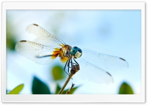 Dragonfly 1 HD Wide Wallpaper for Widescreen