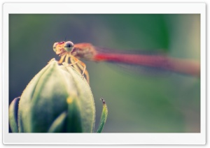 Dragonfly Ultra HD Wallpaper for 4K UHD Widescreen desktop, tablet & smartphone