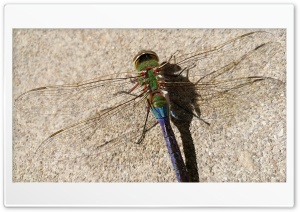 Dragonfly HD Wide Wallpaper for 4K UHD Widescreen desktop & smartphone
