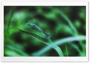Dragonfly Ultra HD Wallpaper for 4K UHD Widescreen desktop, tablet & smartphone