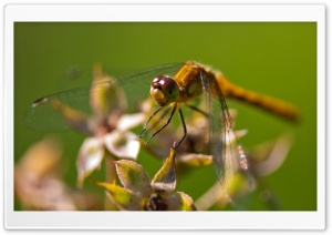 Dragonfly Bokeh HD Wide Wallpaper for Widescreen