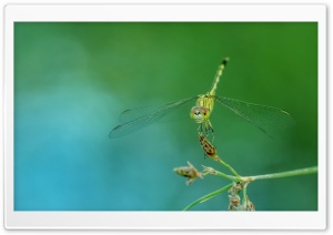 Dragonfly Close-up HD Wide Wallpaper for Widescreen