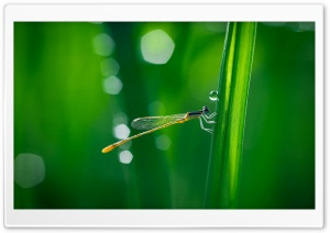 Dragonfly, Green Grass, Macro HD Wide Wallpaper for Widescreen
