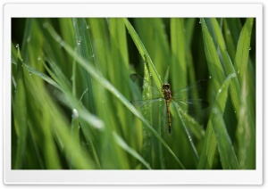 Dragonfly In The Grass HD Wide Wallpaper for Widescreen