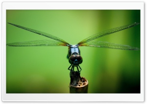 Dragonfly Macro Photography HD Wide Wallpaper for Widescreen