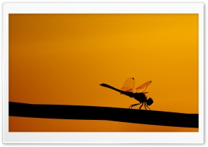 Dragonfly On A Stick HD Wide Wallpaper for Widescreen