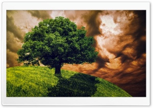 DramaticTree HD Wide Wallpaper for Widescreen