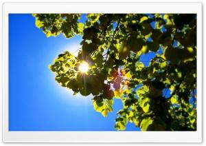 Dream HD Wide Wallpaper for Widescreen