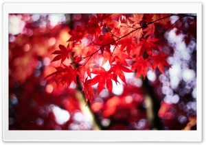 Dream in Red HD Wide Wallpaper for Widescreen