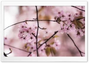 Dreaming About Springtime HD Wide Wallpaper for Widescreen