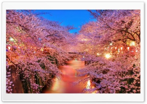 Dreamlike Spring HD Wide Wallpaper for Widescreen