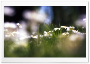 Dreamy Flowers HD Wide Wallpaper for Widescreen