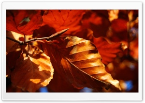 Dried Autumn Leaves HD Wide Wallpaper for Widescreen