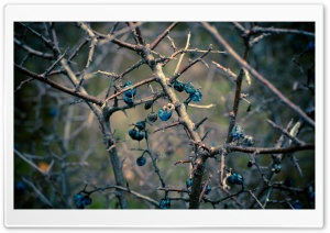 Dried Berries Bush HD Wide Wallpaper for Widescreen