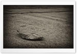 Dried Leaf HD Wide Wallpaper for Widescreen