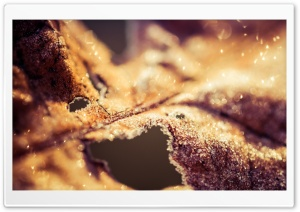 Dried Leaf Bokeh HD Wide Wallpaper for Widescreen